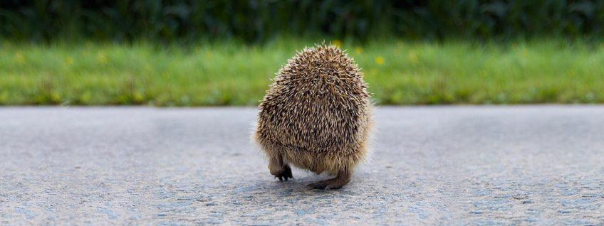 Te veel dieren worden doodgereden, boswachters waarschuwen automobilisten