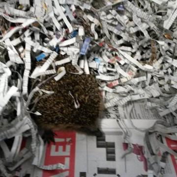 Egeltje Gertrude bedankt voor de kranten!