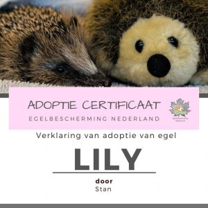 Adoptie met knuffel en certificaat
