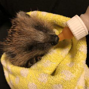 Donatie: flesjes voor baby egels 12 stuks