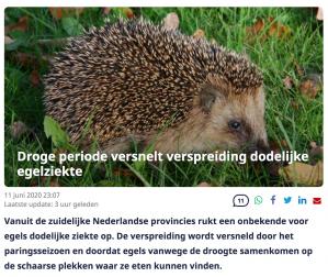 NU.nl: Droge periode versnelt verspreiding dodelijke egelziekte