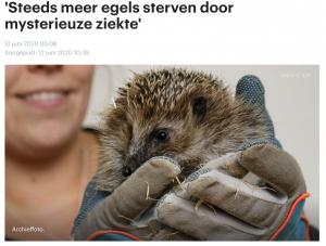 RTL Nieuws: 'Steeds meer egels sterven door mysterieuze ziekte'
