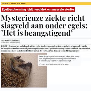 Telegraaf: Mysterieuze ziekte richt slagveld aan onder egels: 'Het is beangstigend'
